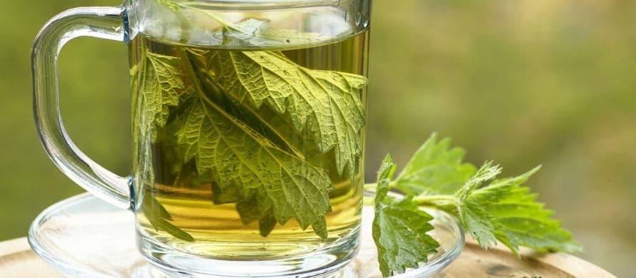 خواص درمانی گیاه گزنه