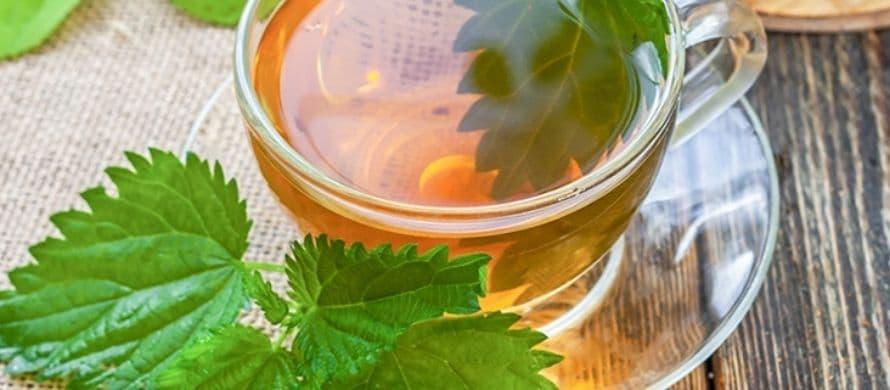 روش تهیه چای گزنه برای لاغری